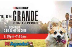 Vive En Grande Con Tu Perro 2018