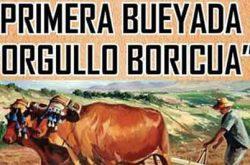Primera Bueyada Orgullo Boricua en Juncos 2019