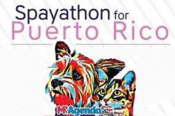 Spayathon for Puerto Rico